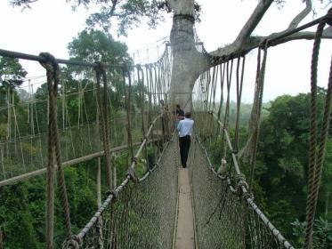 Kakum Canopy Bridge