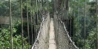Canopy Walk kakum